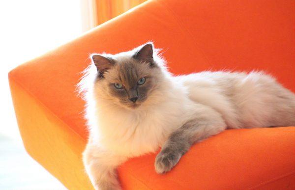 overnight cat photo