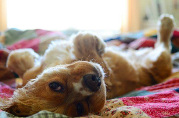overnight puppy photo
