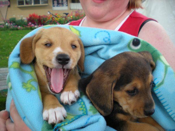 puppy care image